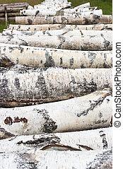 Pile of birch wood