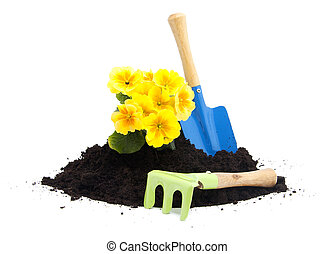 pile of black garden soil with yellow Primula flower and tools over white background