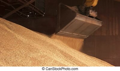 Pile of cereals and tracktor bucket. Huge pile of wheat in a...