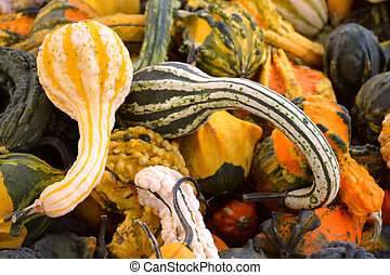 Pile of Colorful Fall Gourds