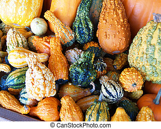 Pile of Colorful Ornamental Gourds