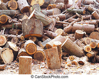 Pile of cut logs in the forest.