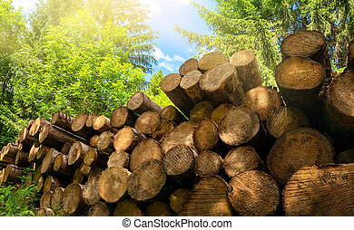 Pile of cut tree trunks in a sunny forest