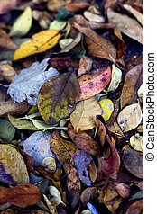 Pile of Dried Autumn Leaves
