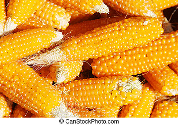 Pile of dried corn cobs