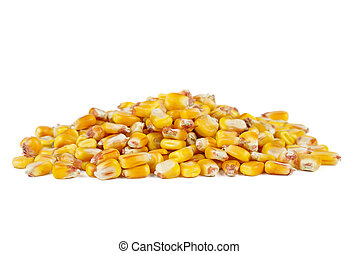 Pile of dried corn seeds isolated on white background