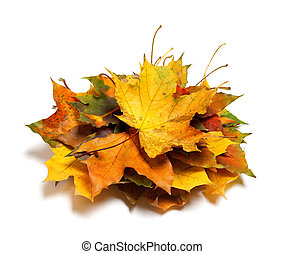 Pile of dry autumn maple leaves