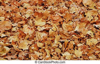 pile of dry autumn vine leaves