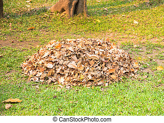 Pile of dry leaf was collect by gardener for make organic fertilizer