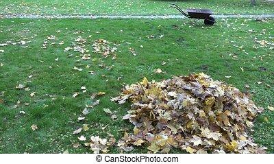 Pile of dry leaves and empty wheelbarrow cart on autumn garden lawn. 4K