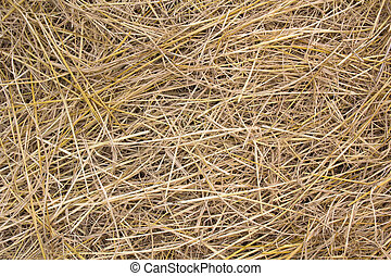pile of dry rice chaff pattern texture and background.