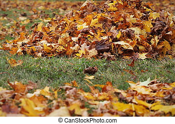 Pile of fallen dried autumn leaves on the ground.