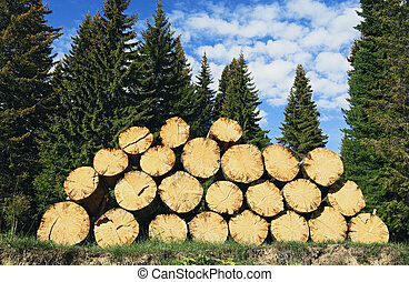 Pile of felled wood lying on the ground