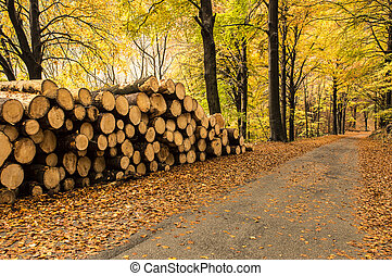 pile of firewood in the forest in autumn
