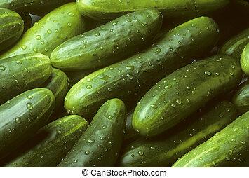 Pile of fresh cucumbers lying diagonally - A pile of fresh...