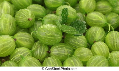 Pile of fresh, juicy berries gooseberry whirl. Green...