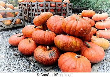 Pile of fresh pumpkins