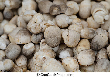 pile of fresh straw mushroom for sale in market ,Thailand