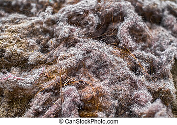 pile of garbage dust from the vacuum cleaner