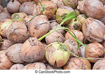 pile of green and brown coconuts and seeding one