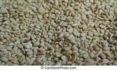 pile of green raw coffee bean