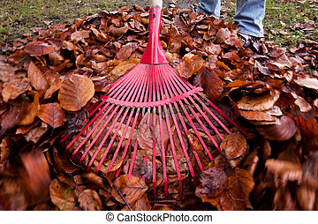Pile of Leaves - Someone of unknown gender and age raking...