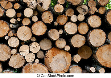 A detail shot of some freshly cut trees stacked in a pile