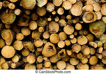 A pile of coniferous logs in a Nordic forest