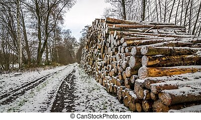 A pile of cut timber logs next to a track in the woods