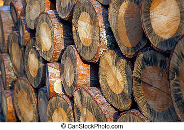 Close up of pile of logs in sunshine