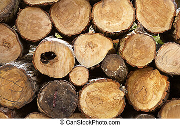 Pile of logs cut ready for use in a fire, some winter frost on the bark