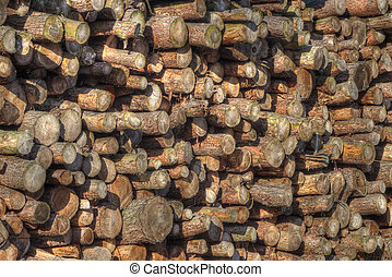 Large pile of logs drying ready for cutting