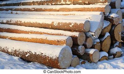 Pile of logs on snow