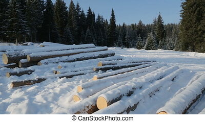 Pile of logs on snow in forest