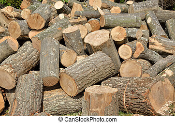 Pile of cut conifer logs - different sizes