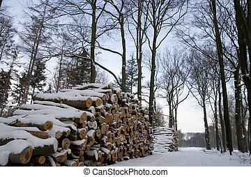 Pile of logs in a forest during Winter