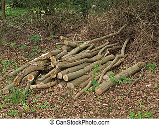 Pile of logs left to attract wildlife in a British wood.