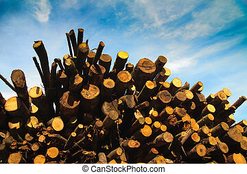 Pile of logs, please see also my other images