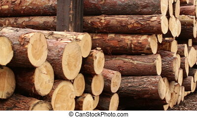 pile of logs processing of biofuels