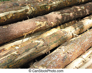 Timber stacked in pile for transportation. Damaged bark