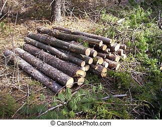 pile of logs,lunenburg county nova scotia