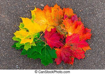 Pile of maple leaves on the asphalt close-up in autumn