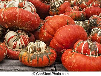 Pile of multicolored pumpkins for sale