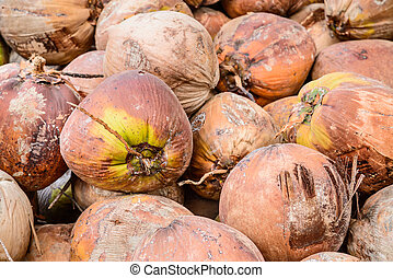 Pile of old brown coconuts on the ground, Thailand.