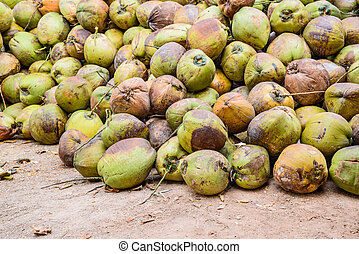 Pile of old coconuts on the ground, Thailand.
