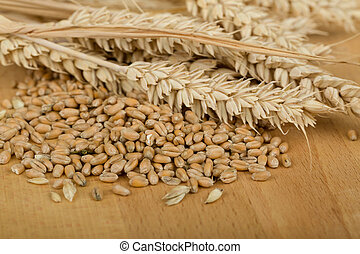 pile of organic whole grain wheat kernels and ears