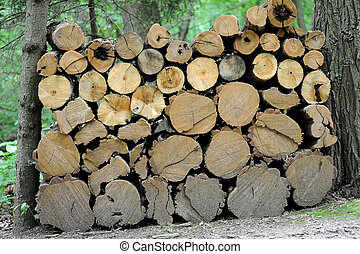 Pile of pine tree logs