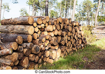 pile of pine tree trunks cut