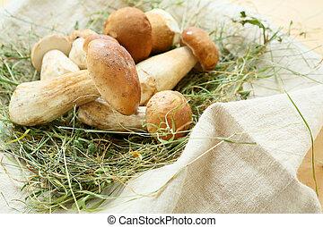 pile of porcini mushrooms on hay, food