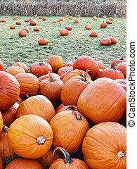 Pile of pumpkins at pumpkin patch